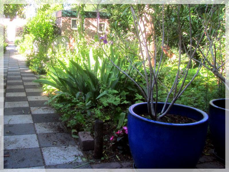 Foto van het tuinpad en oleanders in blauwe potten